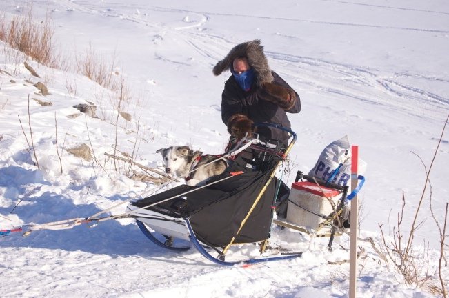 dog_in_sled_2_sm